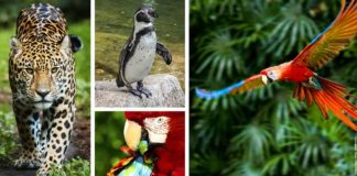 animaux parrot world